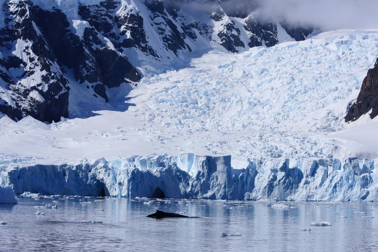 A whale breaching in Paradise Harbour, Antarctica