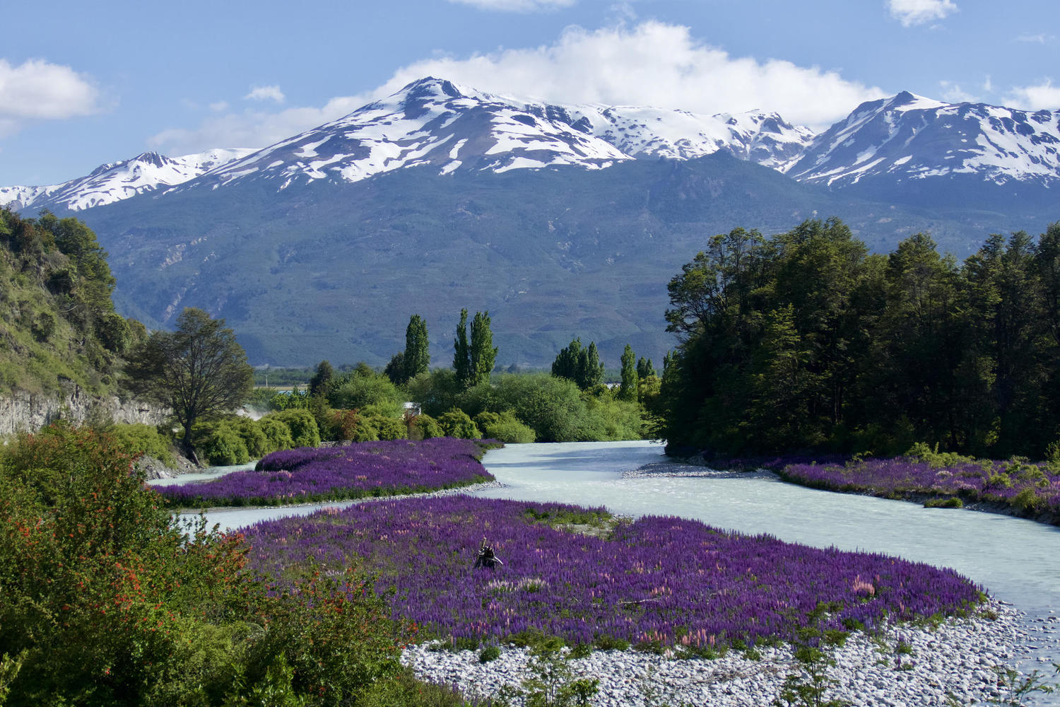 The spring flowers have bloomed along the Carretera Austral