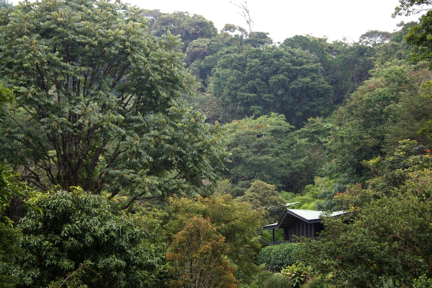 Staying in the heart of the Monteverde cloudforest