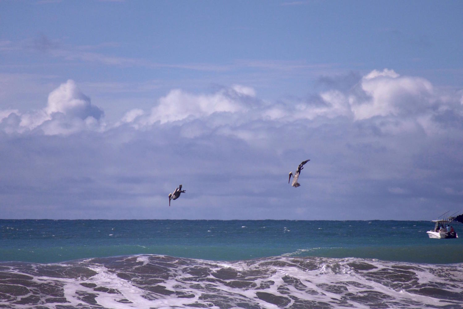 Pelicans dive bombing off Matapalo Beach