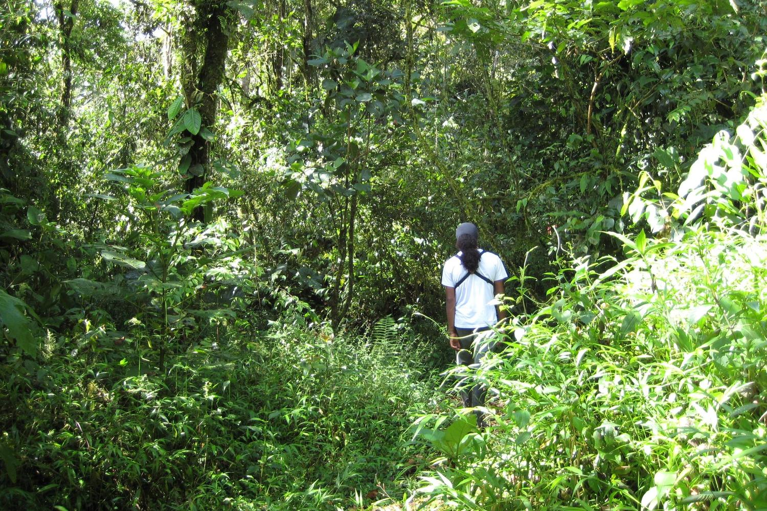 Guide leading a visit to the cloud forest of Mindo