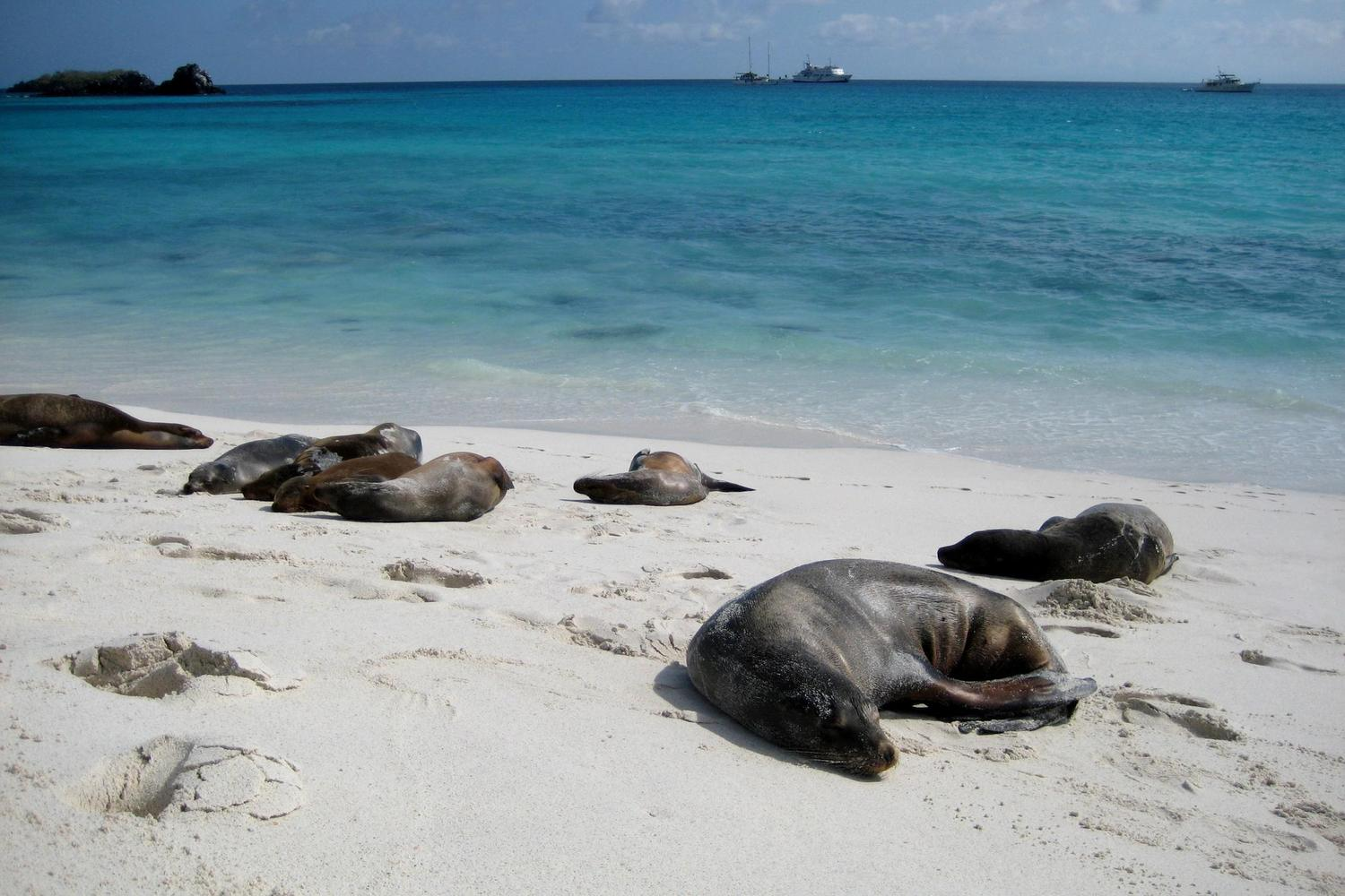 Sea lions asleep at Gardener Bay, Galapagos