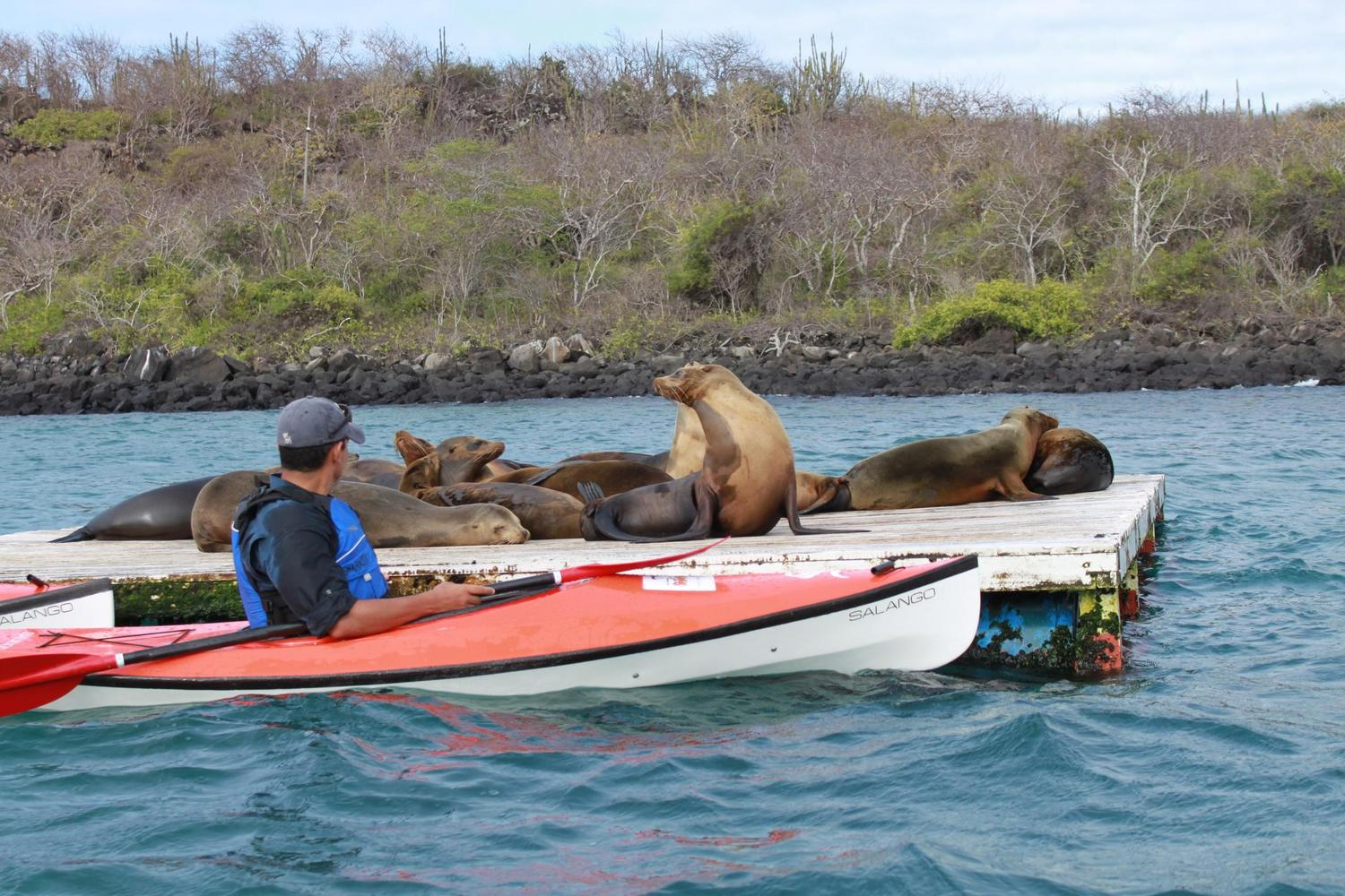 Sea kayaking past resting sea lions in the Galapagos