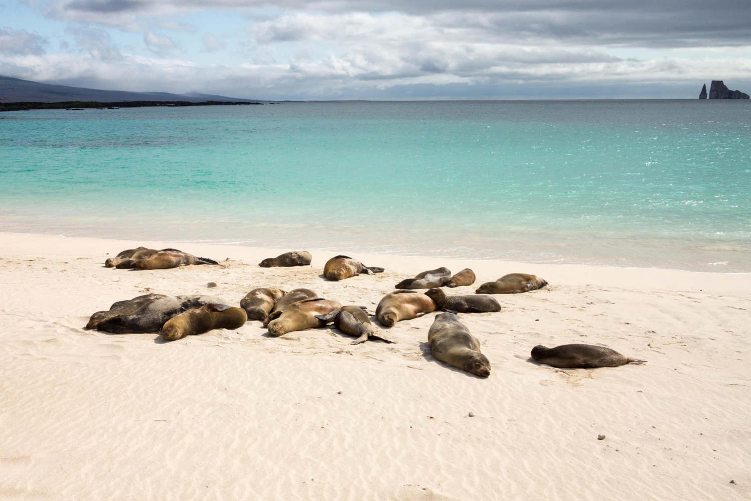 Single seal sits on beach in Galapagos island