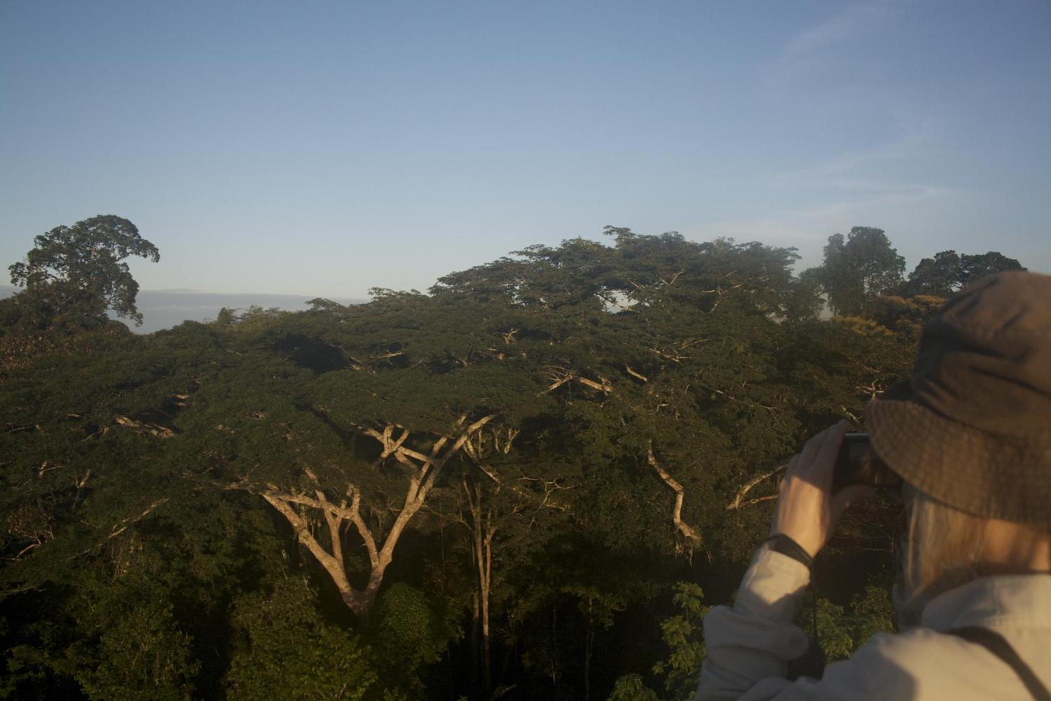 Looking out over the canopy of the Refugio Amazonas