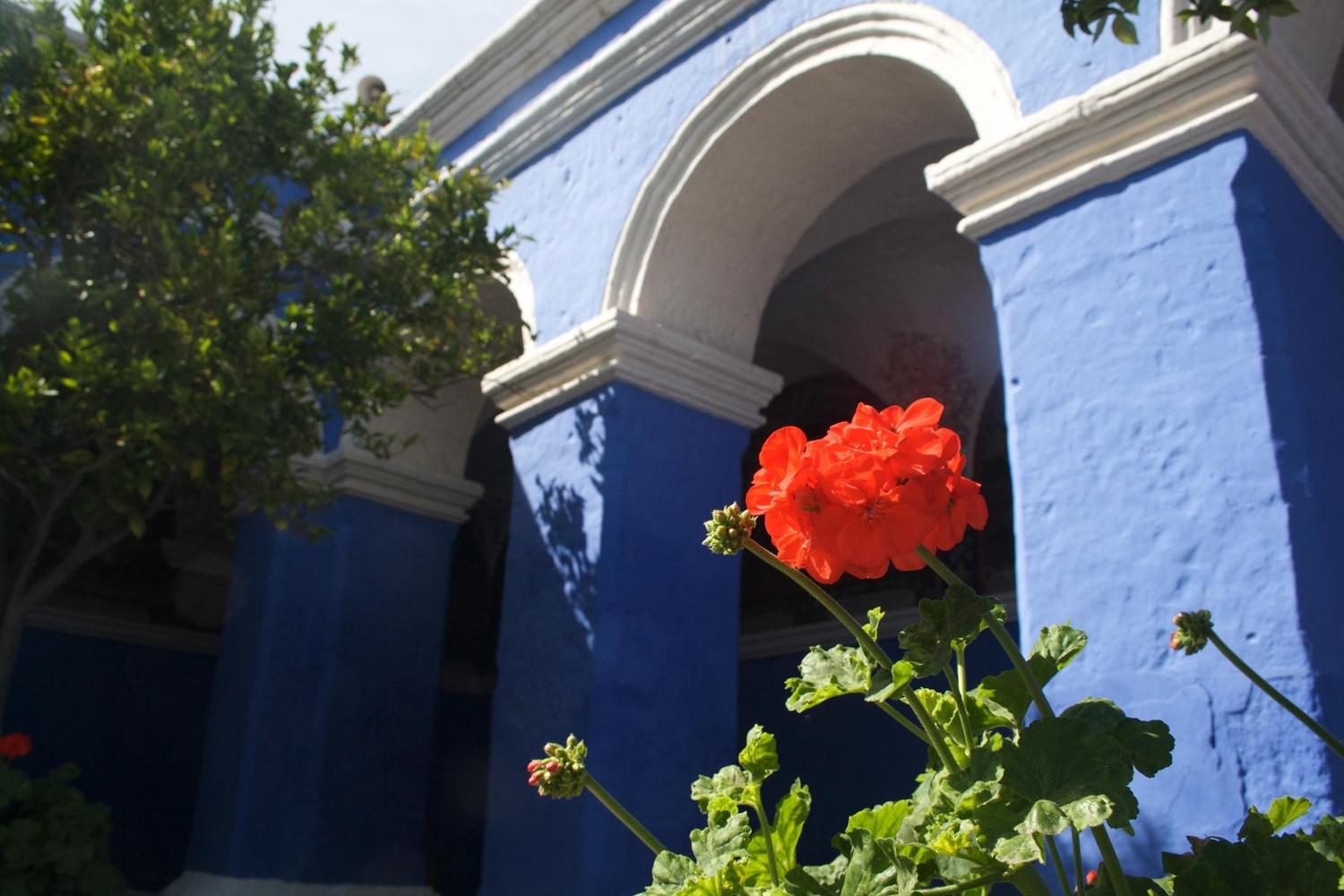 Geranium in the Santa Catalina convent of Arequipa
