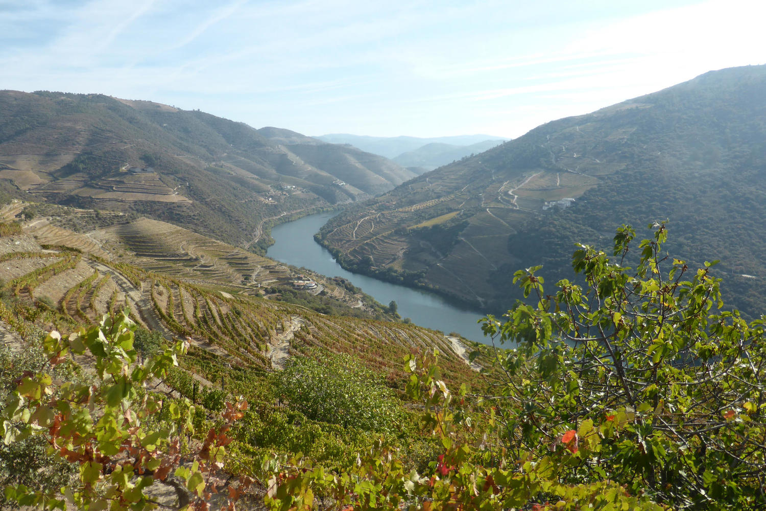 Lovely view over the River Douro and its vineyards