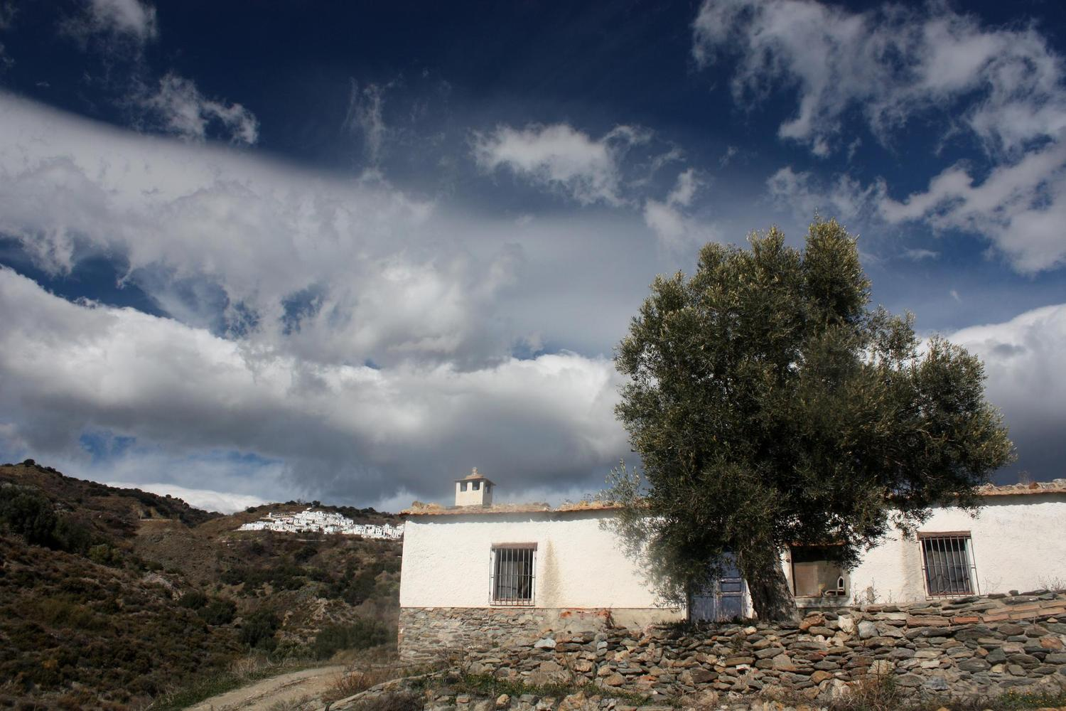 Looking back up from olive groves towards Mairena village in the Alpujarras