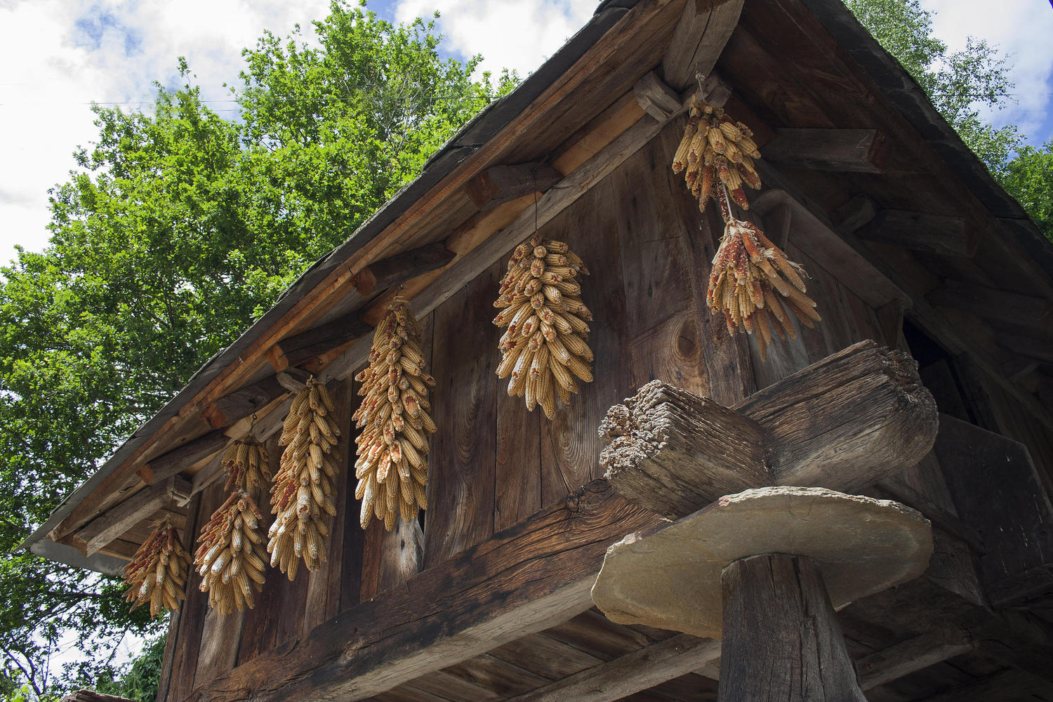 Corn drying in the traditional horreos.