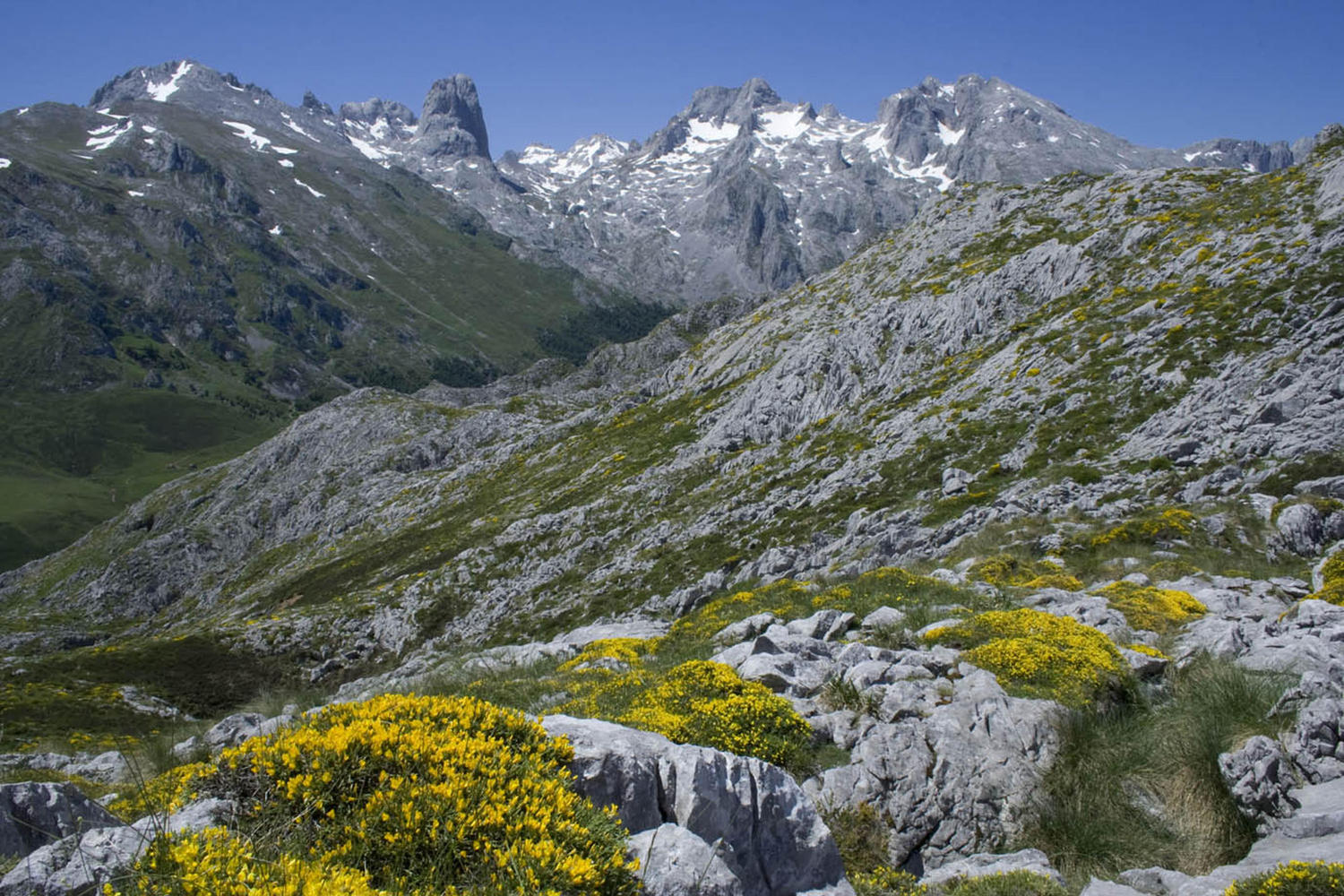Spring in the high Picos.