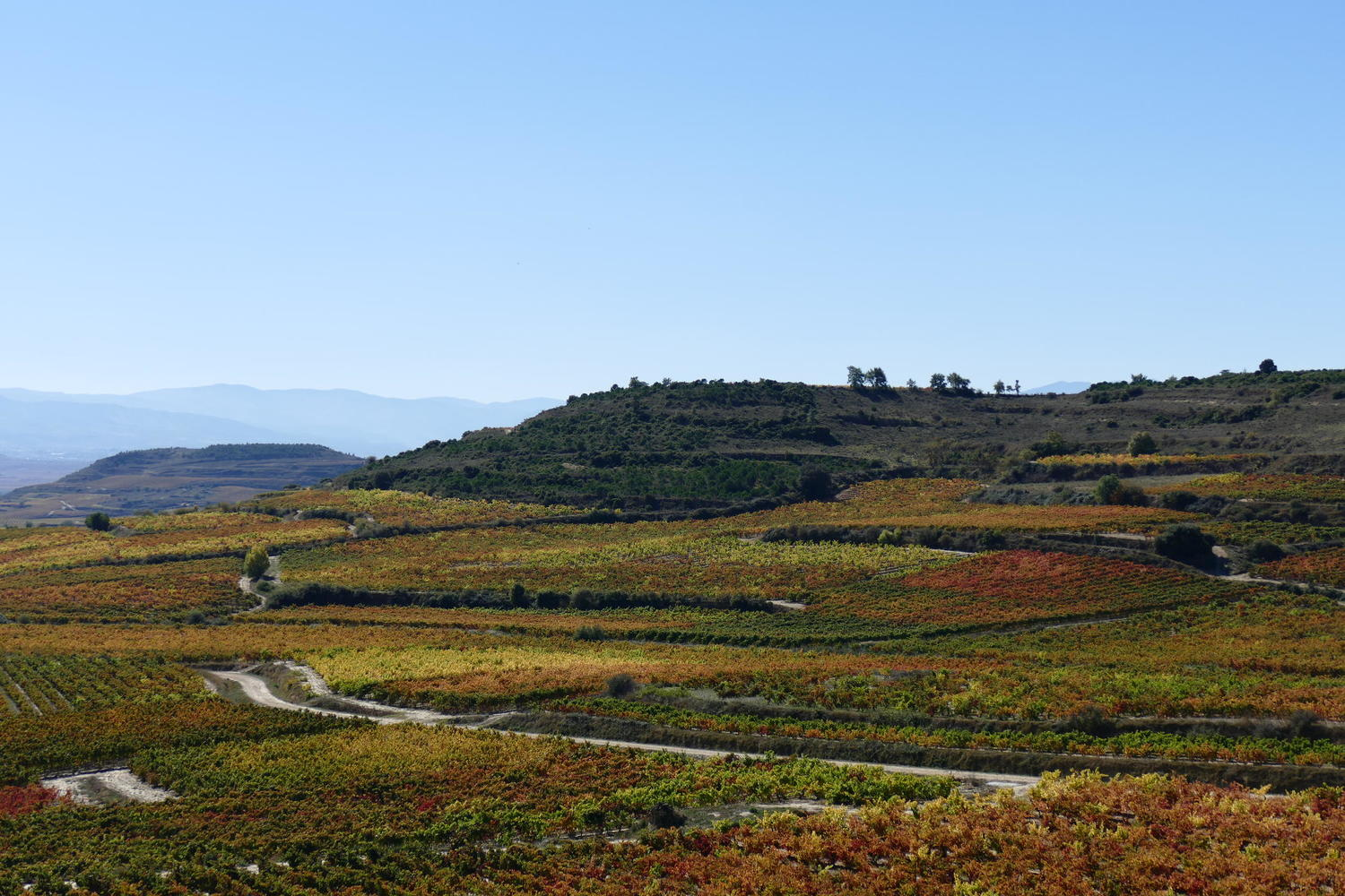 Autumn vines in the hills of Basque Rioja