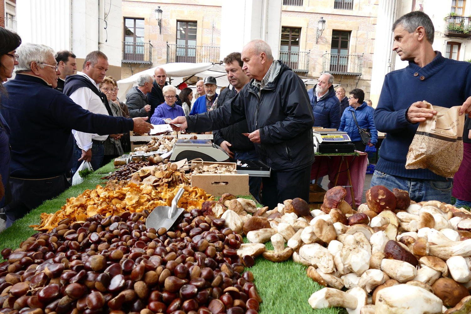 Inspecting the autumnal haul of mushrooms in the market