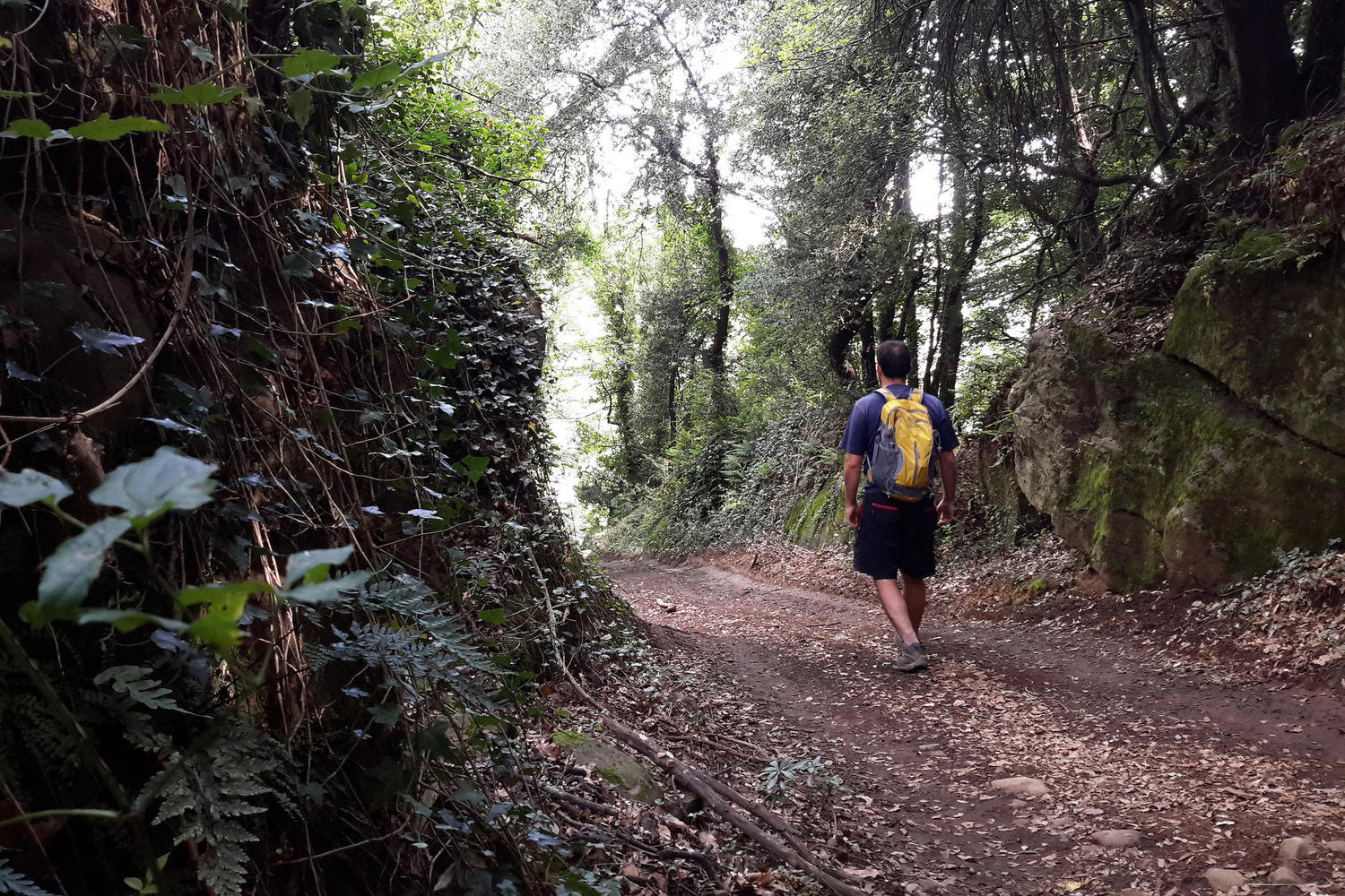 Shady forest trails in Garrotxa Natural Park