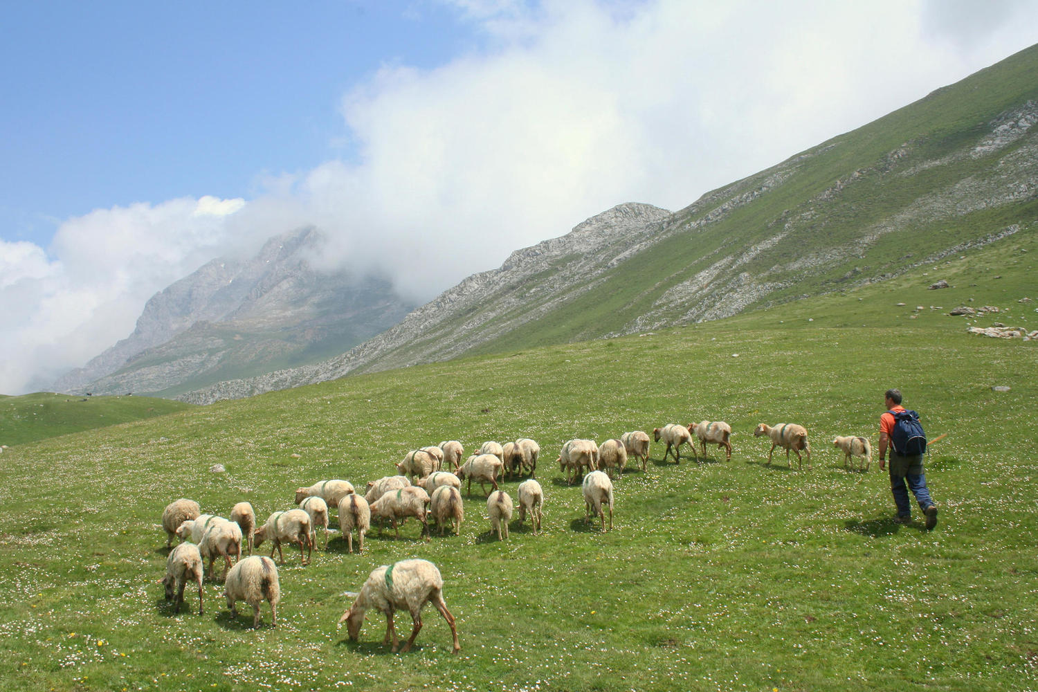 The flocks spend the summer in the Aliva pastures.
