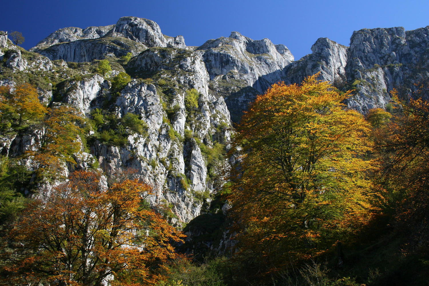 The autumn colors are at its best in the Picos at the end of october.