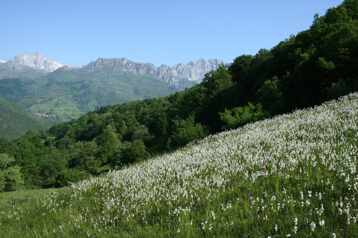 Blossoming meadows in the Dobarganes pass.