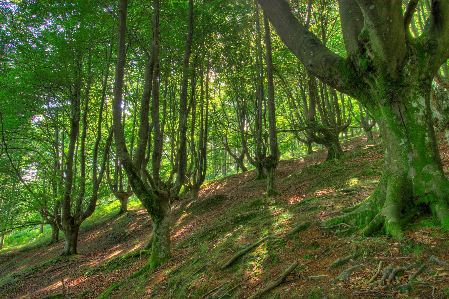 The forests of Monte Gorbeia in Vizcaya province of Spain