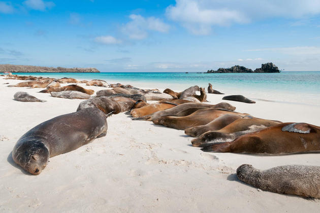 Ecuador-galapagos-islands-espanola-island-galapagos-with-many-sea-lions-sleeping-on-a-beach