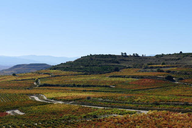 Spain-basque-country-la-rioja-vineyards-behind-baigorri