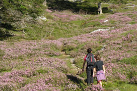 Spain-asturias-picos-heather-family-walking